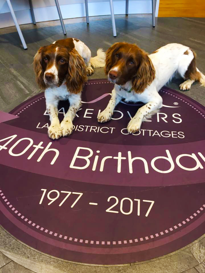 Max and Paddy help Lakelovers celebrate 4 decades of Lake District cottages