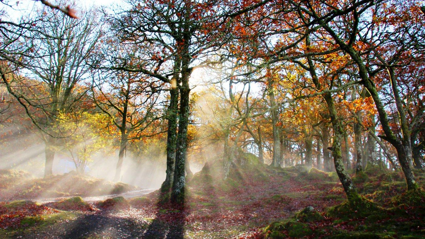 Ashness Woods Copyright David Welham