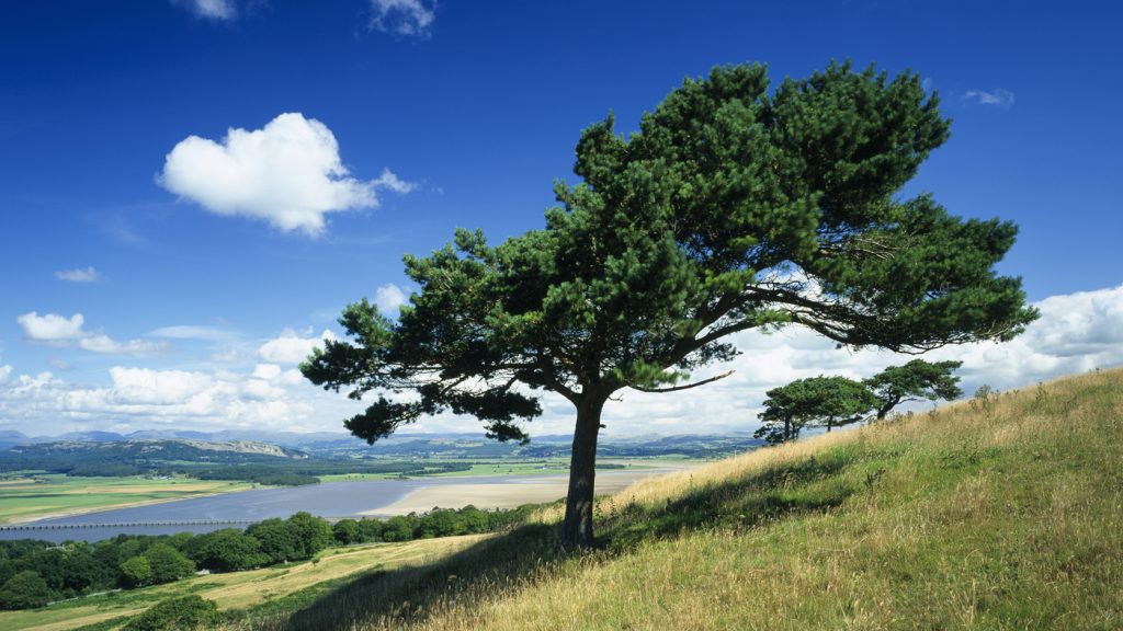 The wildlife-rich area of Arnside and Silverdale, south of Morecambe Bay. Image © National Trust