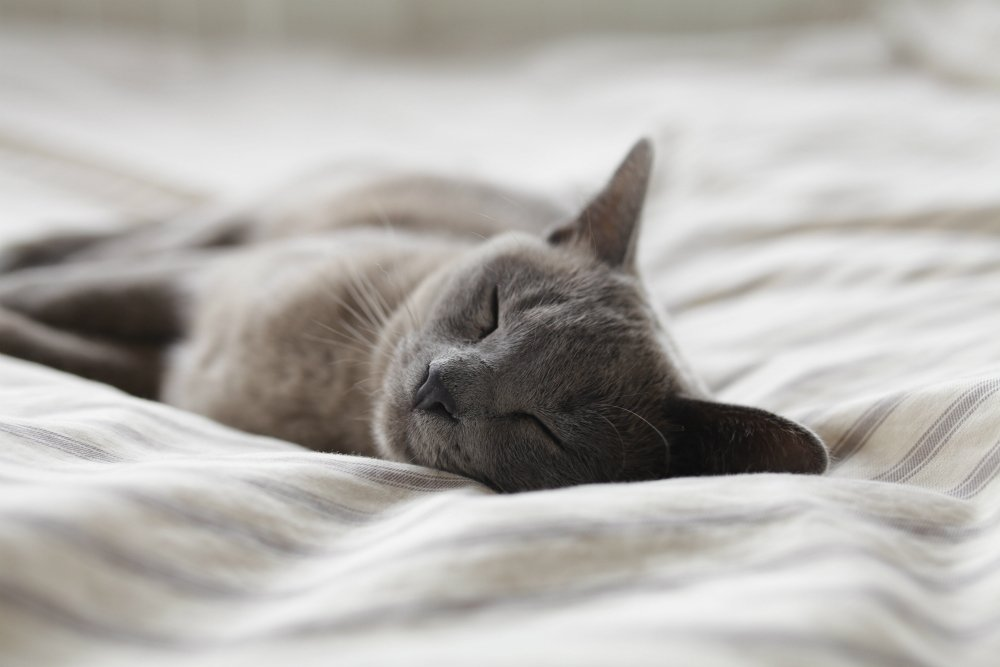 cat nap sleep