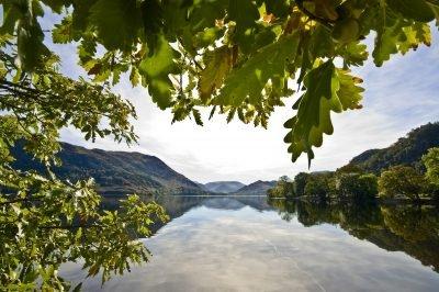 Oak trees at Glencoyne bay on Ullswater looking towards Glenridding