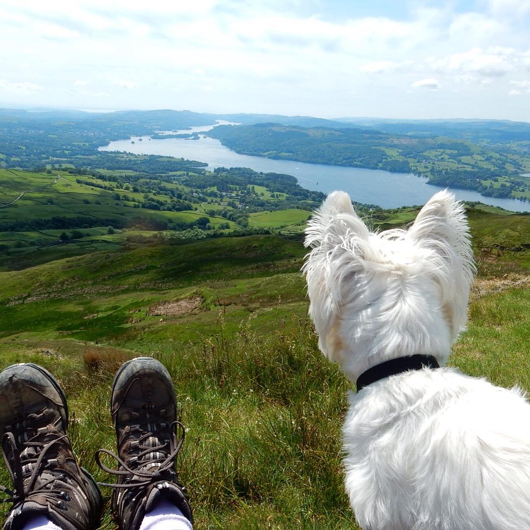 Dog walks in the Lake District - Rebus