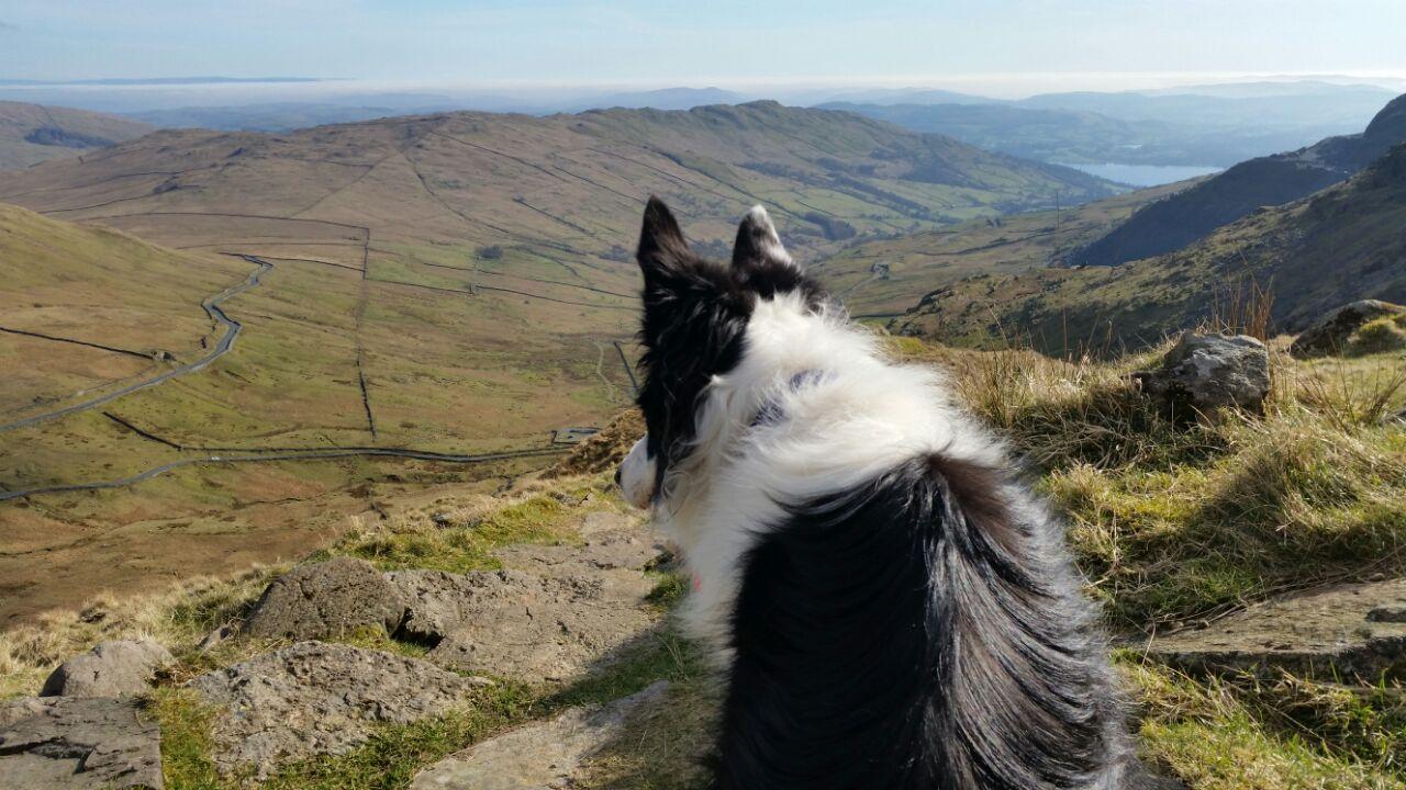 Dog walks in the Lake District - Jack at Kirkstone Pass