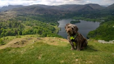 Dog walks in the Lake District - Ruby up Loughrigg
