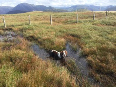 Lakelovers' Dog comp winner Harris on Gavel Fell in the Lake District.
