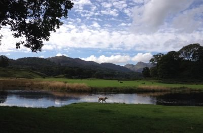 Dog walks in the Lake District - Diego at Elterwater